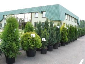 Республиканский лесной селекционно-семеноводческий центр